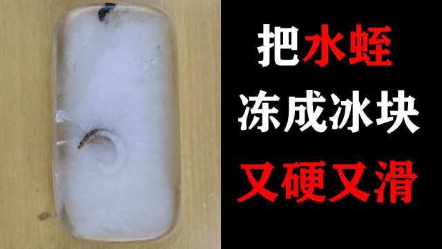 把水蛭冻成冰块,水蛭又硬又滑