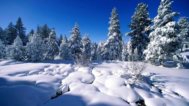 看!北方的艳阳里开始大雪纷飞了