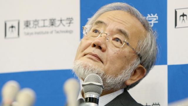 日本为什么能平均每年拿个诺奖?