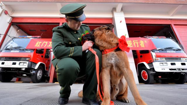 退伍了,跟我走吧,我的搜救犬战友