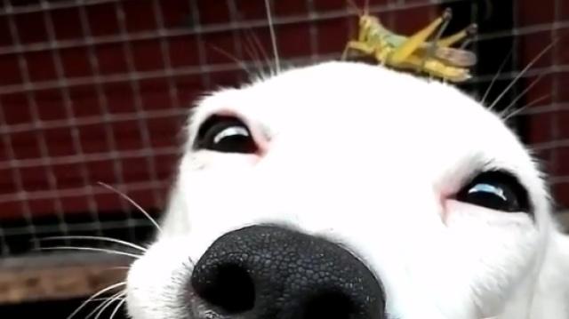 狗狗头上落只虫子,妈!!!