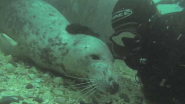 潜水遇上海豹:这么巧,你也在这