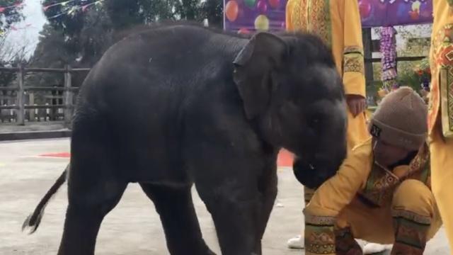 小象的水果被母象偷吃,发飙饲养员