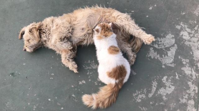 这肥猫癖好怪!每天在母狗怀里喝奶