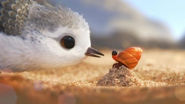 治愈系,奥斯卡最佳动画短片《鹬》