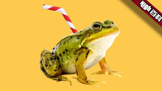 High百科:没喝过青蛙汁敢自称猛男?