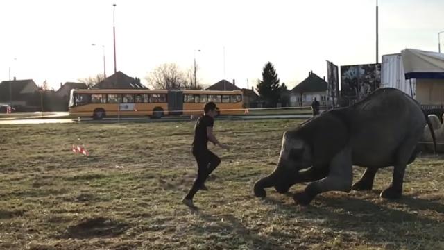 特技表演:如何在大象背上翻跟头