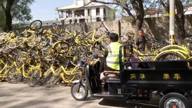 他们每天满街遛,寻找破损的小黄车