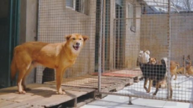 救助不易,千人报名终只领走一只狗