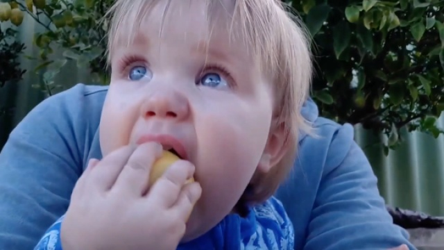 萌娃吃柠檬,像吃苹果大口咬