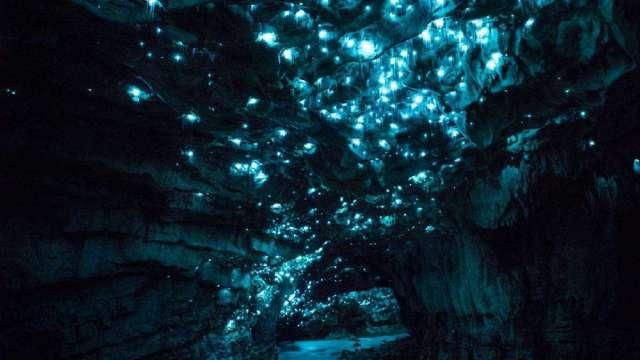 深入地下,数百万萤火虫发光捕食