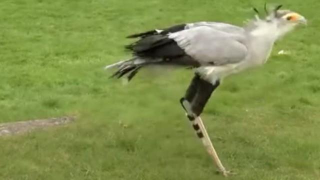 3D科技拯救断腿鸟儿:科技也很有爱