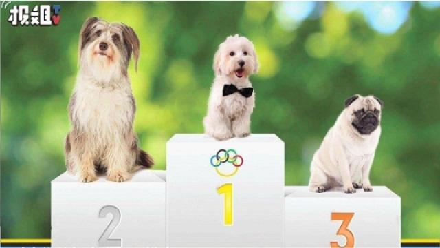 狗狗的智商排名,你家那货排第几?
