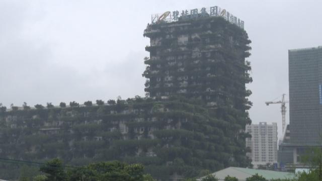 从植物中长出的高楼,宛如空中森林
