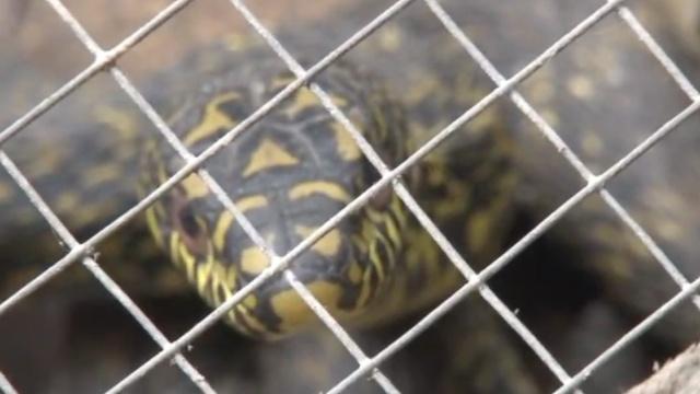 吓!有人带70条野生蛇,上了长途客车
