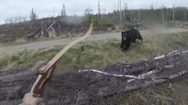 惊险!加拿大猎人正面对峙黑熊