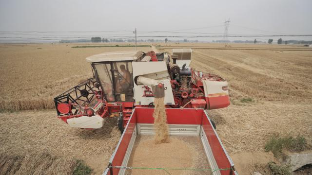 风吹8千万亩麦浪,麦客踩星光收割