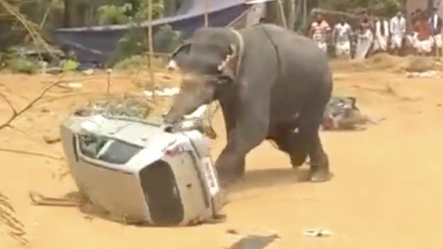 大象大闹庆典现场,头顶汽车并掀翻