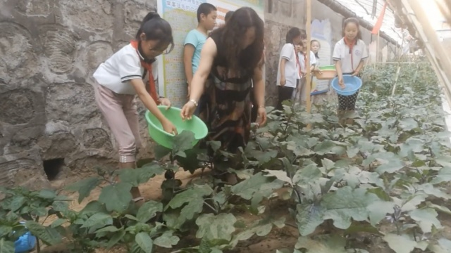小学生校园种菜,茄子黄瓜应有尽有