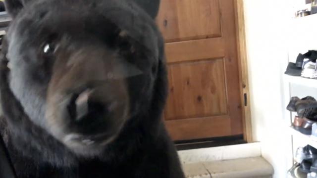 闯车库又偷零食,逆天黑熊被