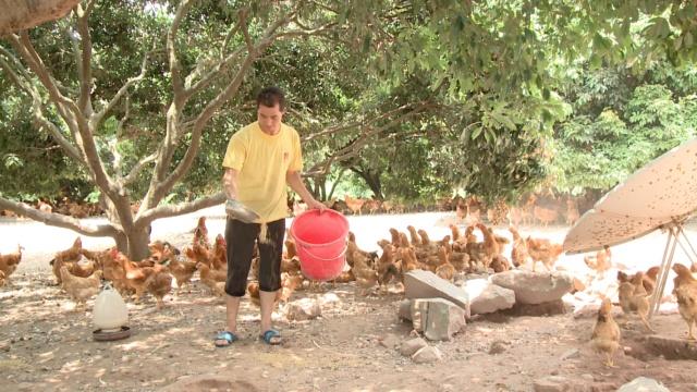 10万只鸡滞销,农户苦笑:我没伙食了
