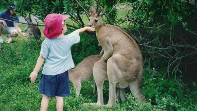 土澳人民喜乐多:打袋鼠抓活蛇