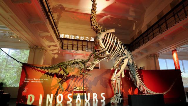 直播:澳大利亚博馆,恐龙金矿探蛮荒