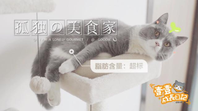如何解决猫咪不吃猫草?