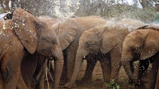 直播:大象孤儿院,拒绝沦为人类奴隶