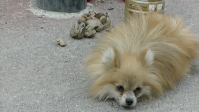 小狗生病被弃,环卫工:下辈子别跟他