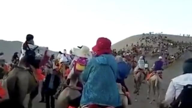 堵车?弱爆了!敦煌这里堵骆驼