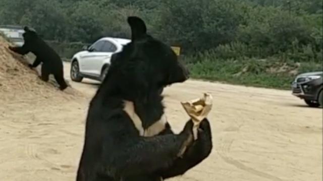 被熊咬者斥园方撒谎,驱赶时已被咬
