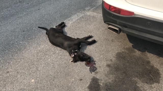 男子不牵狗绳,爱犬被撞拖行数米