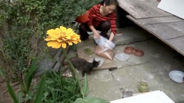 她喂养40多只流浪猫狗,不敢去旅游
