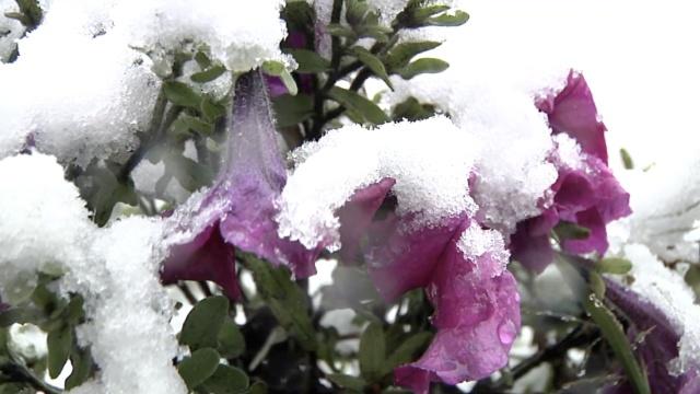 南方正酷暑,漠河迎来今年第一场雪