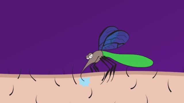 灭蚊行动:美国释放2000万只蚊子