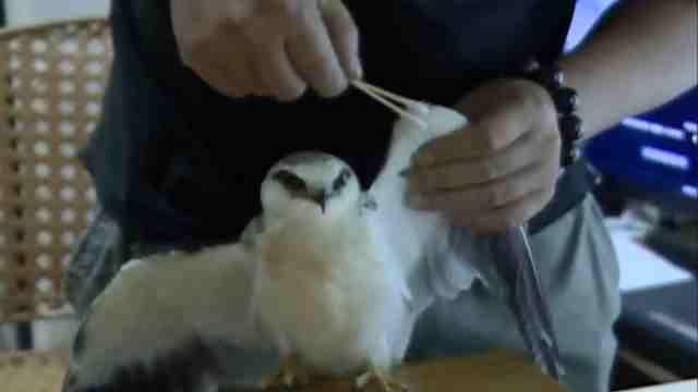 这鸟受伤落草丛哀叫,获救瞪眼耍帅