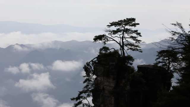 雨过天晴,张家界天子山现云瀑奇观