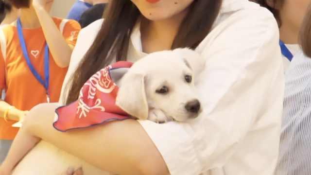 请关爱中华田园犬,虽然它颜值不高
