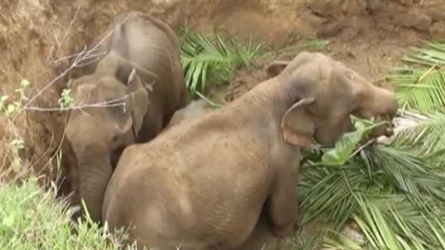 四头小象被困,好心村民齐力救援
