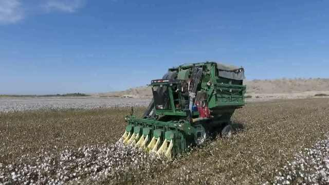 4台采棉机来帮忙,1小时采棉花25亩