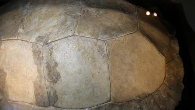 探访金沙遗址,对话古蜀祖先—龟甲