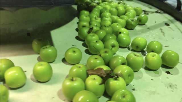 参观南非苹果园,原来苹果这样打包