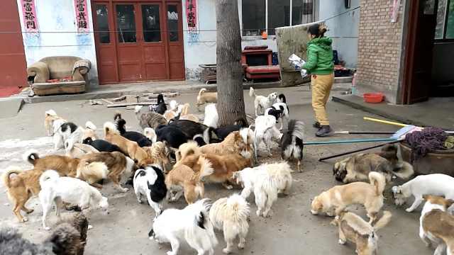 她收养110只流浪狗,9年花去10多万