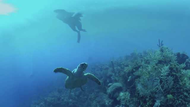 惬意!深海潜水,邂逅一只小海龟