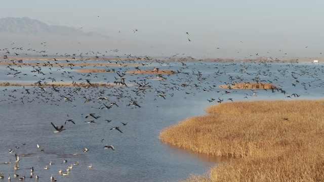 震撼!数万候鸟整装待发,去南方赴约