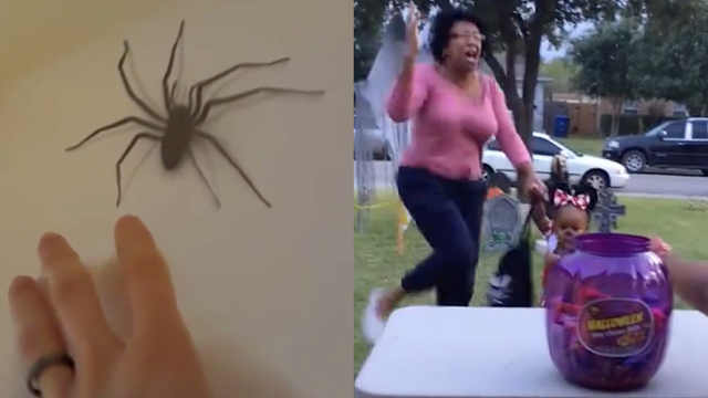 那些被蜘蛛吓崩溃的瞬间