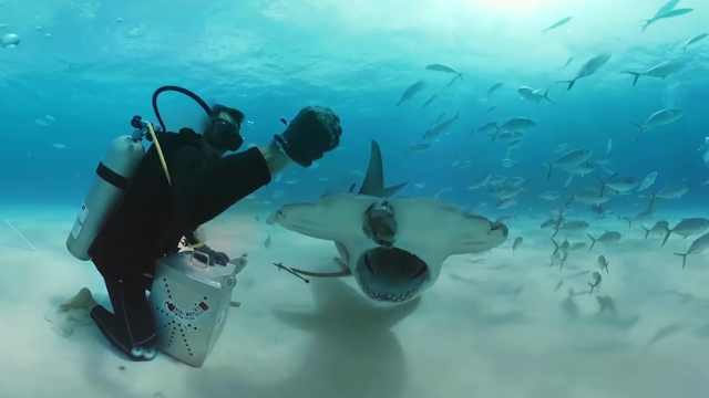 国外胆大小哥,潜入海底给鲨鱼喂食