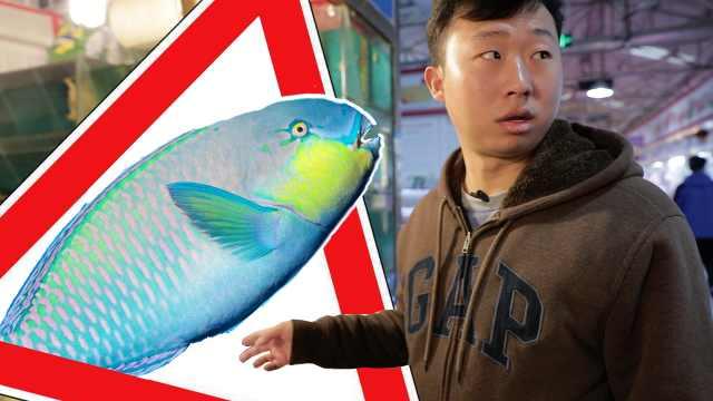 博物小亮:爱吃这种鱼?祈祷別中奖