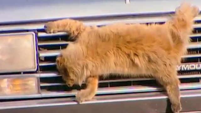 猫敏捷为什么公路死的猫比狗狗还多